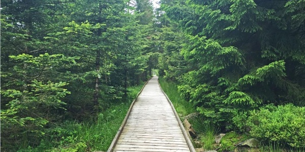 Holzweg zum Hochmoor Hohlohsee