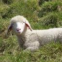 Profilbild von Verein Schaferlebnis am Hauser Kaibling