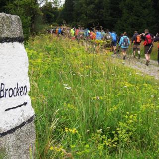 Kollonenweg (Brockenaufstieg über Harzer Grenzweg)