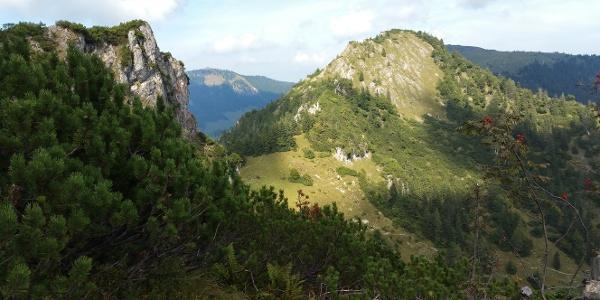 Blick zurück zum Brandelberg - im Hintergrund Hochries