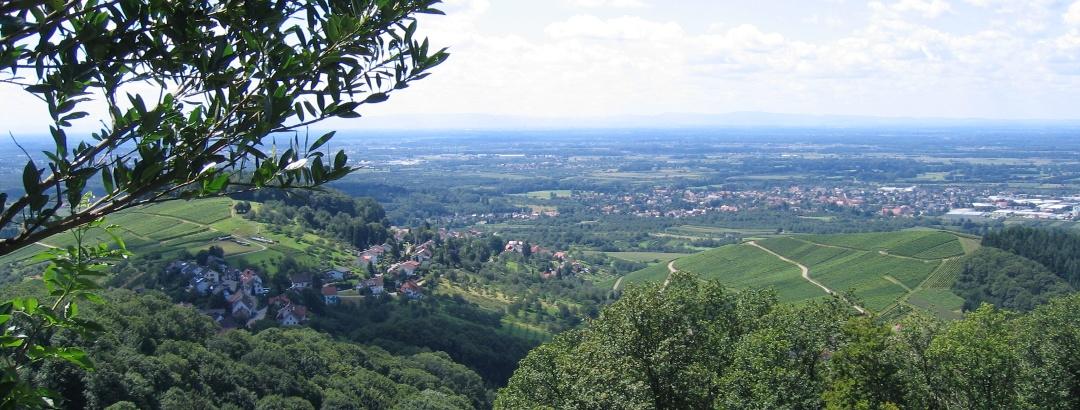 Aussicht auf Bühl und die Weinberge