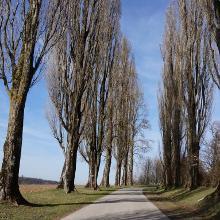 Pappelallee zw. Batzenhof und Thomashof