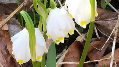 Besonders schön im März- natürlich wgen dem Märzenbecher