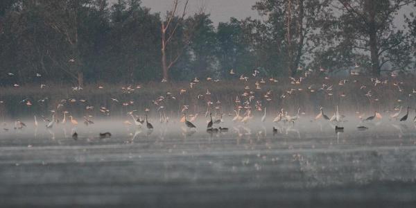 Péteri-tó