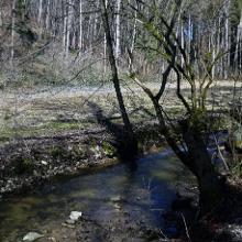 Krebsbach, im Hintergrund blühen die Märzenbecher