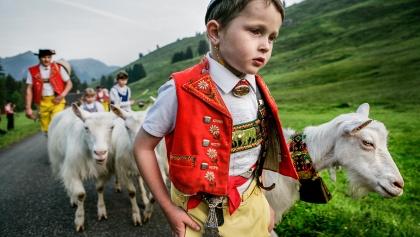 Alpfahrt im Appenzellerland