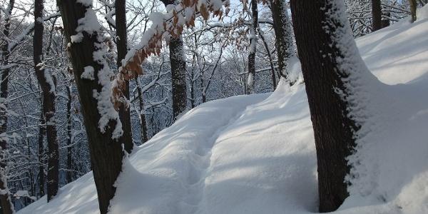 Winter im Kleditschgrund 2010