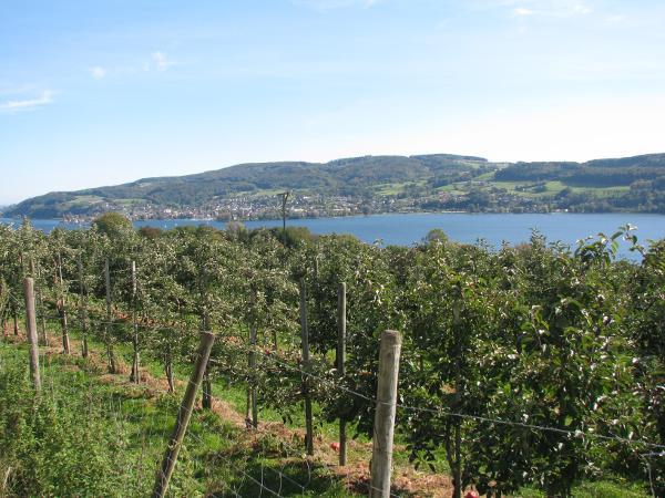 Blick vom Panoramaweg nach Steckborn
