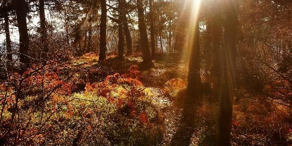 Im Wald auf dem Monte Calino