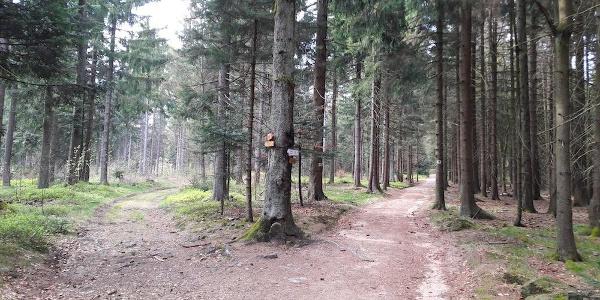 Weggabelung nach dem Riedernkreuz - links verläuft der Rundweg