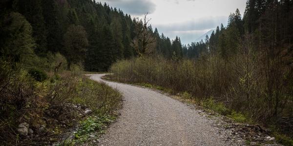 Forstweg durchs Sägertal