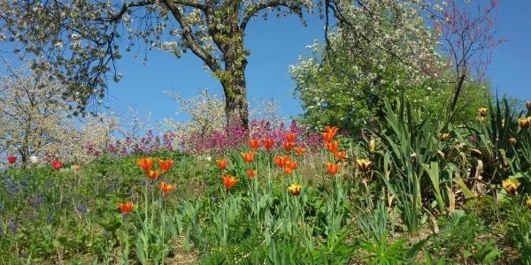 Blumenwiese am Dobel