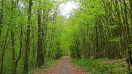 Weg zur Grube Bausberg