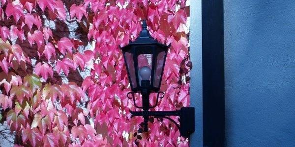 Herbst_Impression