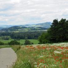 Weg bei Weiler, Blick in den Hegau