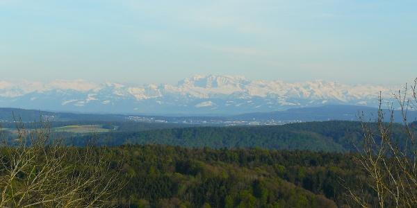 Sicht vom Hochrhein-Höhenweg auf die verschneiten Alpen