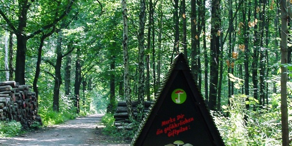 Oberholz Großpösna