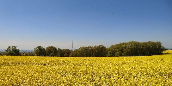 Zwischen Quohren und Gönnsdorf erblicken wir den Dresdner Fernsehturm
