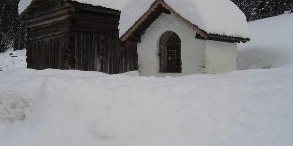 Winter Ganifer
