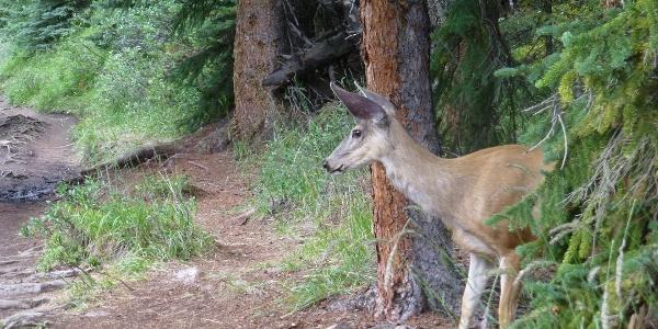 Wild animals at the roadside aren't rare.