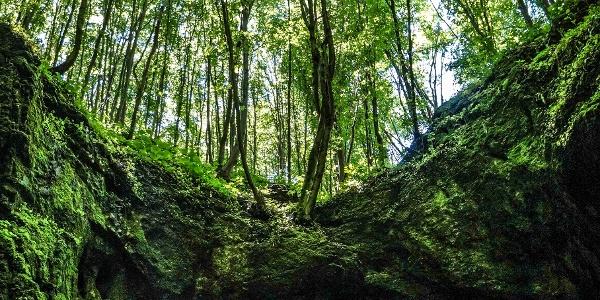 Különleges perspektíva nyílik az erdő alól az Udvar-kő-barlangból