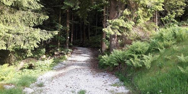Wanderweg Nr. 18 am Waldrand in Hohenried