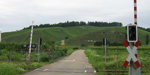 Bahnübergang am Haltepunkt Buchholz mit Rebberge, Blick in Wanderrichtung