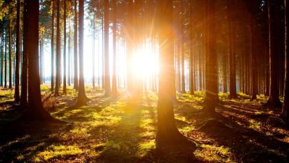 Sonnenaufgang an der Waldroute
