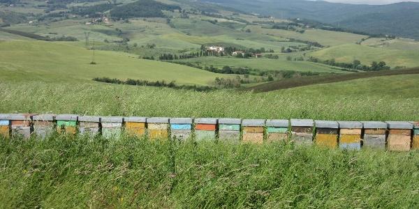 Beehives en route