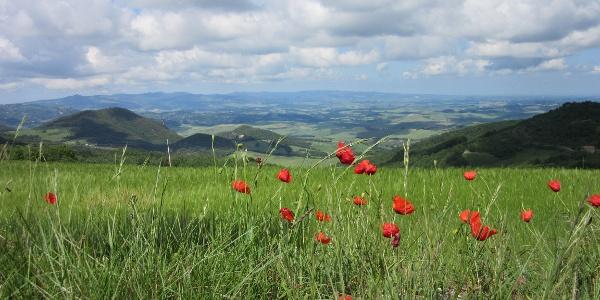 Poppies & views en route