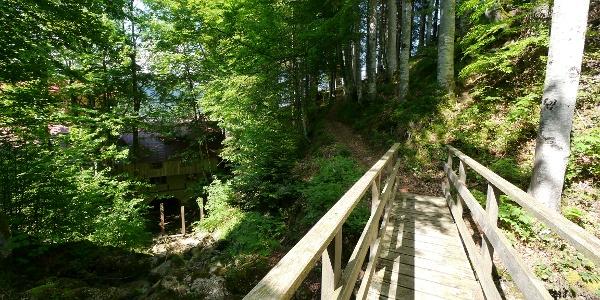 Zu Beginn steigen wir ein kurzes Stück durch den Wald bergauf.