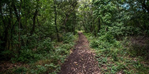 Szárliget - Dorog (OKT-11) • Long Distance Hiking » Explore