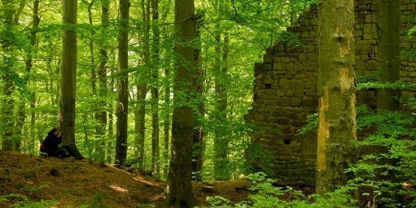 Ruine Burg Rabenswald