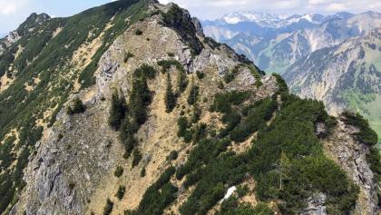 Der interessanteste Teil des Grates (Blick nach Norden vom Schmalhorn)