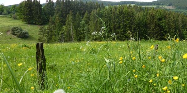 Unterwegs auf dem Bergweg von Küstelberg nach Deifeld