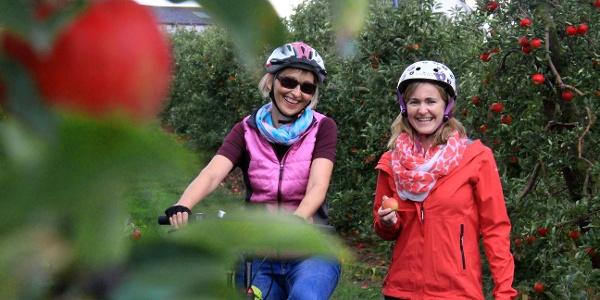 Radler in Apfelplantage im Alten Land