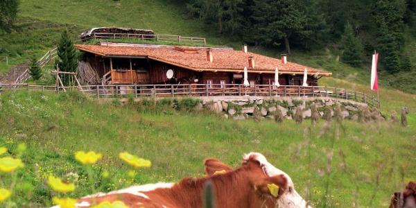 Pircher Alm   Hiking area Speikboden