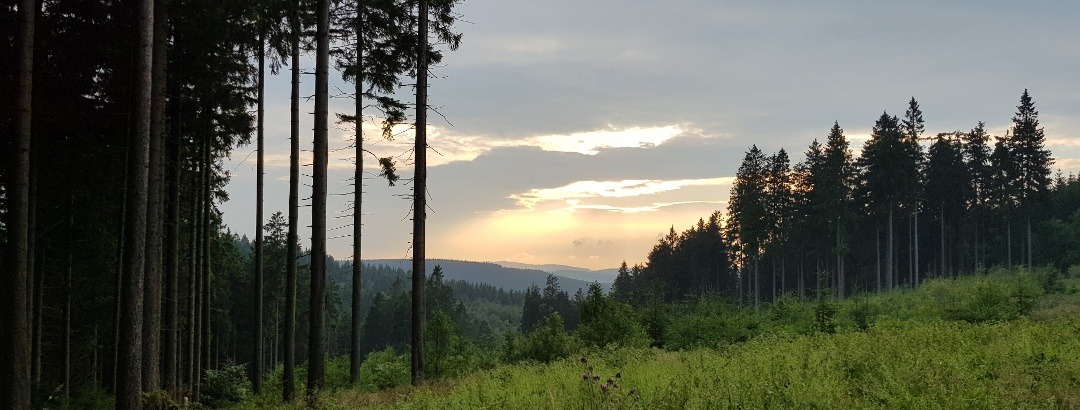 Unterwegs auf dem Medebacher Bergweg von Medelon hinauf nach Küstelberg.