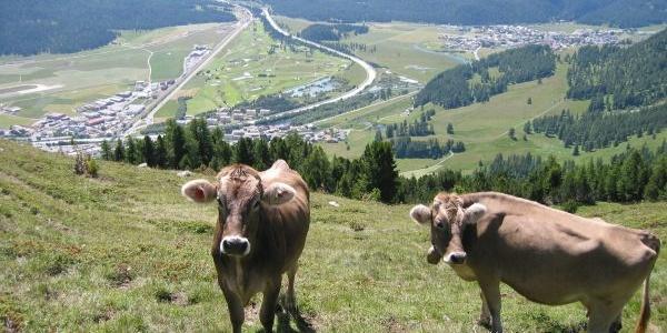Blick von der Alp Muntatsch aufs Tal
