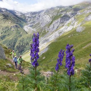 Wanderweg Richtung Bifertenhütte
