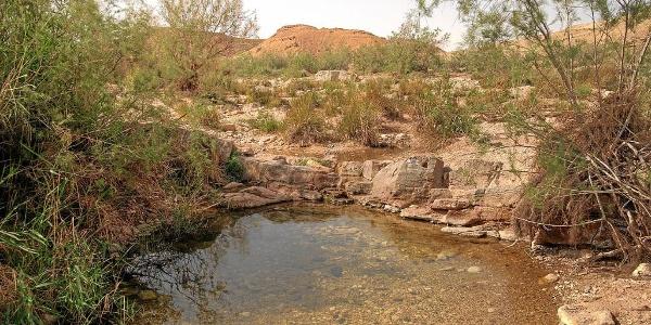 Saharonim Quelle