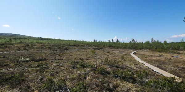 Wooden walkways make it easier to hike through the moor.