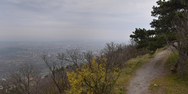 A Flóra-pihenőhöz vezető ösvényen