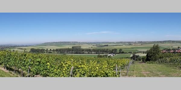 Sulzheimer Weinpanorama