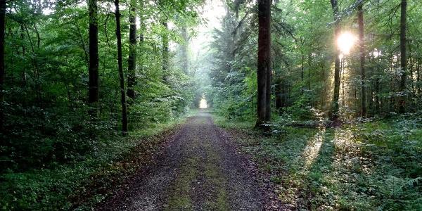 "0100 Im ersten Waldabschnitt ab Lenzburg| 47°24'19.9""N 8°09'40.3""E"