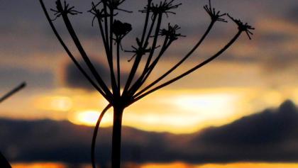 Kunstwerk der Natur im Abendlicht