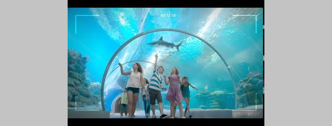 פארק המצפה התת ימי. אילת - איך זה מרגיש לפגוש כריש?