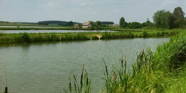 Fischweiher bei Höchstadt