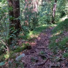 Wurzelweg am Außerberg (Nüziders)
