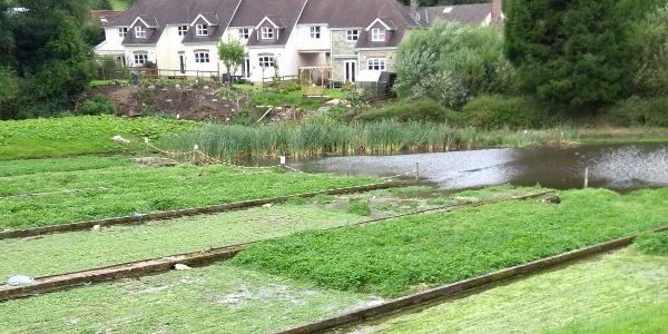 Watercress Beds, Ludwell